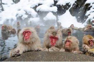サルの温泉.jpg